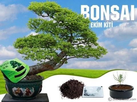 Bonsai Ekim Kiti Masanızda Ağaç Yetiştirin