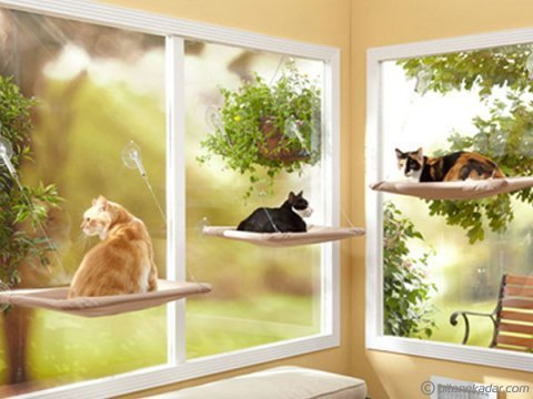 Cama Asılan Kedi Yatağı: Sunny Seat