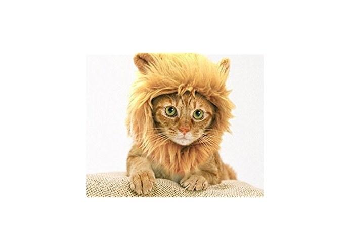 Kedi Aslan Yelesi Peruk