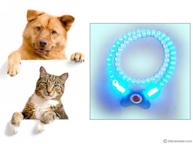 Kedi ve Köpek Kolyesi (LED Işıklı)